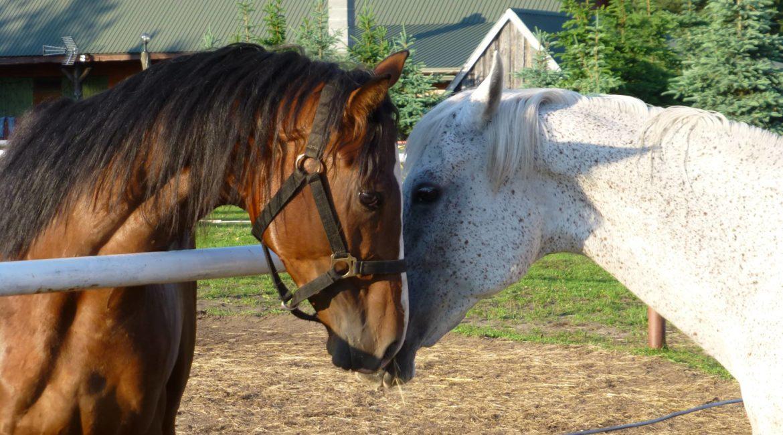 My i konie